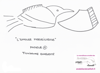 modele-oiseau-tichodrome A4.png